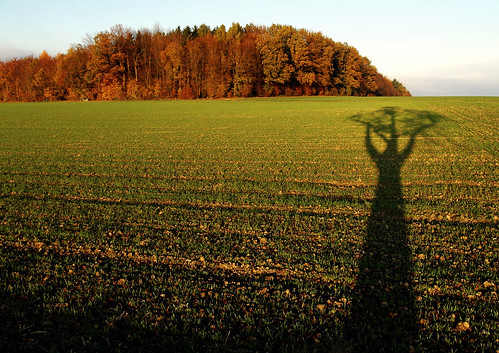 Tree shadow | by jazzman25696