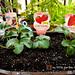 strawberries-in-my-little-garden-in-japan-1