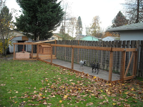 Dog Run - Completed with Dogs Added | Dog house on covered ...