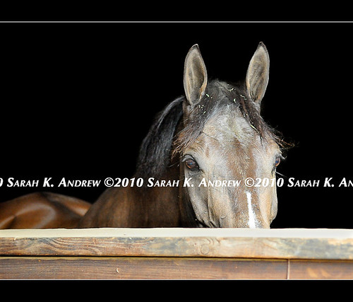 This Week's Available Camelot Horses | by Rock and Racehorses