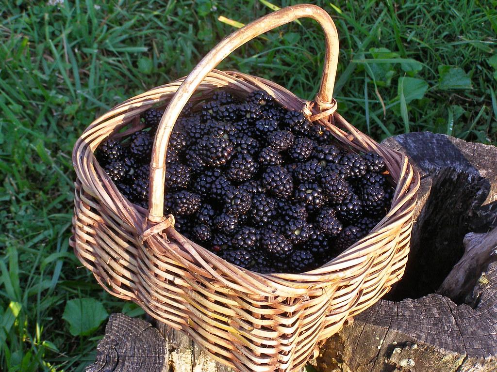 blackberry basket