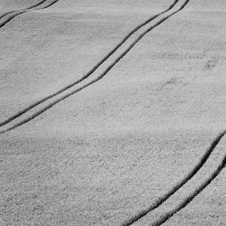 Wiltshire Field Lines - 2 | by J e n s