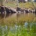 Bear Gulch Reservoir