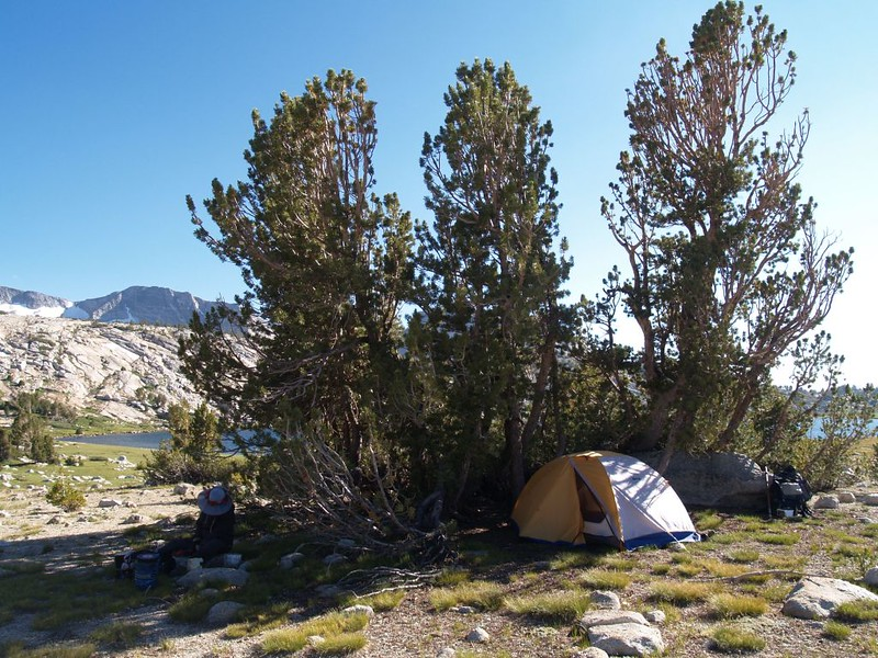 We set up our tent in the shelter of these Limber Pines to get out of the relentless wind
