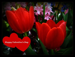Happy Valentine's Day * Series | by Blanca Rosa2008 +3,900,000 Views Thanks to All