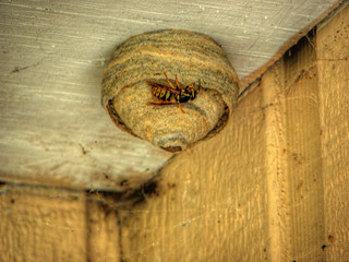 a wasp nest?! | by The White Wоlf