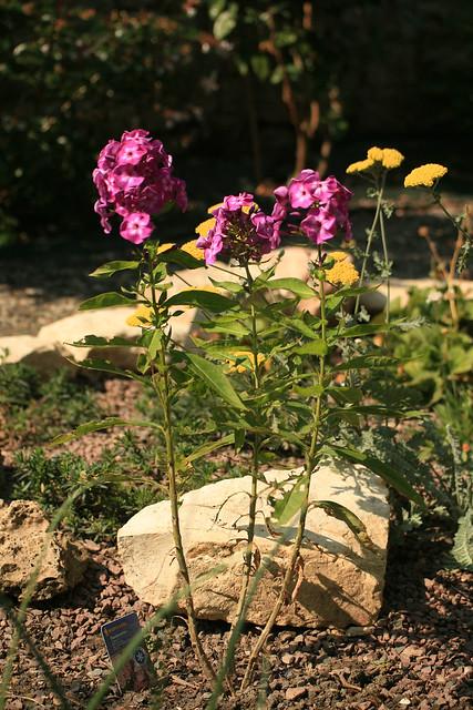 Mes coins de jardin pr f r s d but juillet 2010 for Jardin 5 juillet biskra