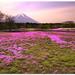 Fuji Shibazakura (Moss Pink)