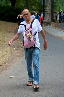 Angry man with pink dog snuggly | by katiew