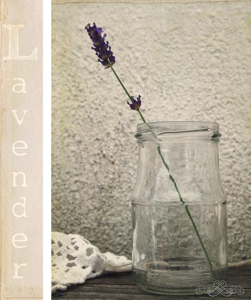 fragrant herbs frl klein flickr. Black Bedroom Furniture Sets. Home Design Ideas