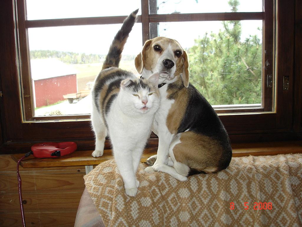 Dog House Pet Supplies Fresno Ca