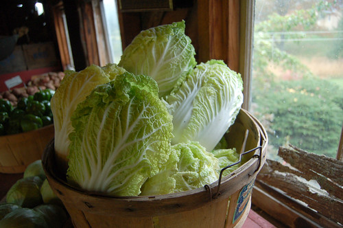 Napa Cabbage | by ilovebutter