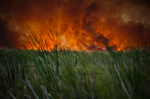 Fire Through the Grass | by goingslowly