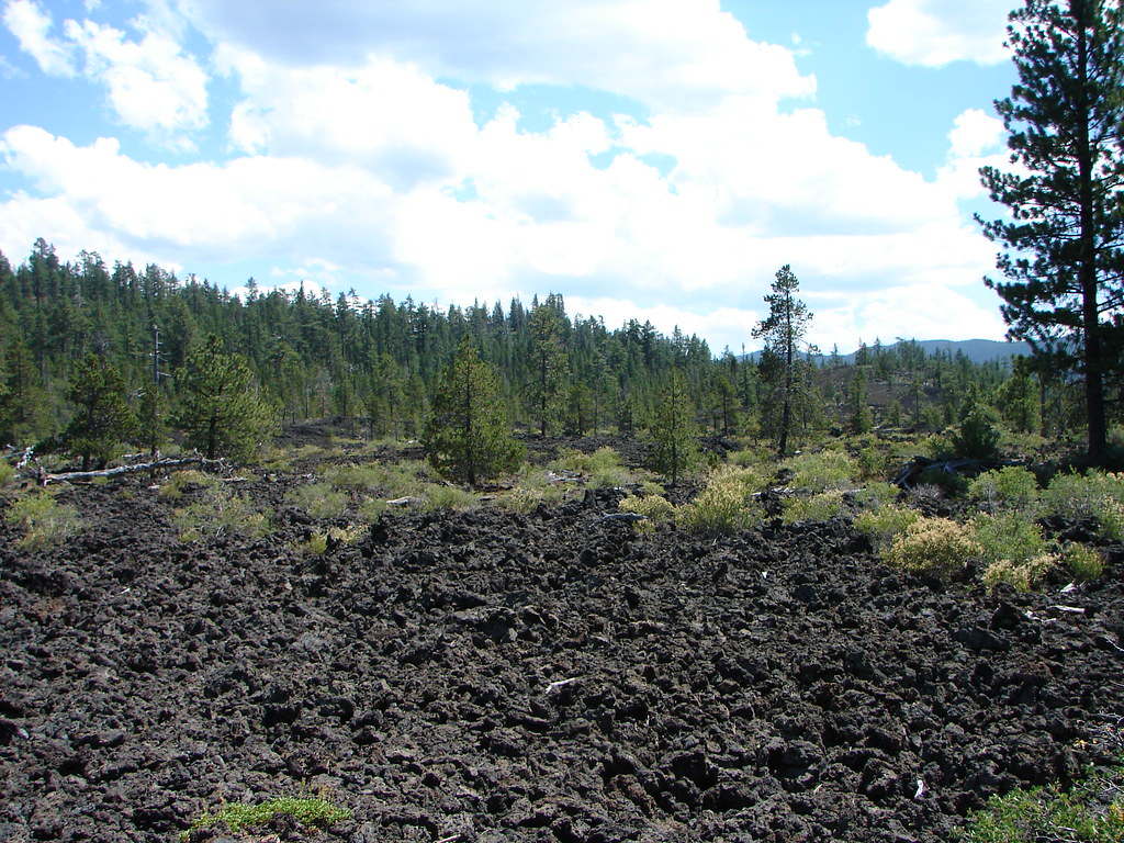 Lava cast forest