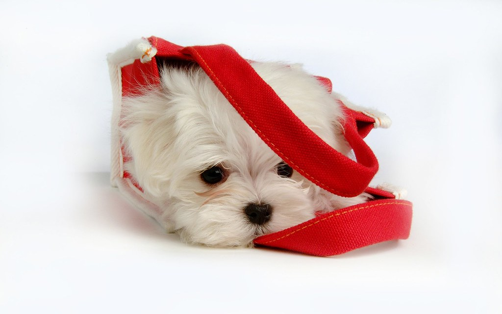 Image Result For A Dog Bed