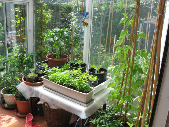 In this very small garden shared with a cat and toddler for Very small garden