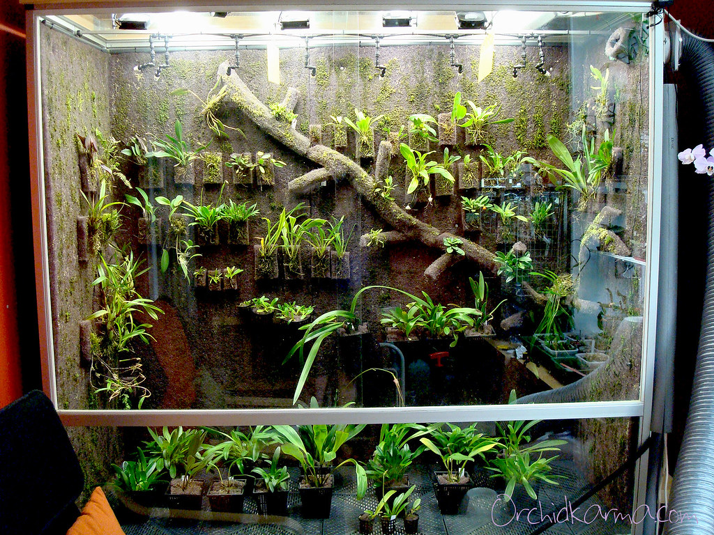 Orchid Cool Vivarium 2010 07 20 Mouse Over The Photo To