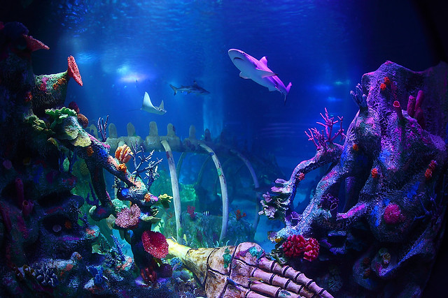 Sea Life Aquarium Flickr Photo Sharing