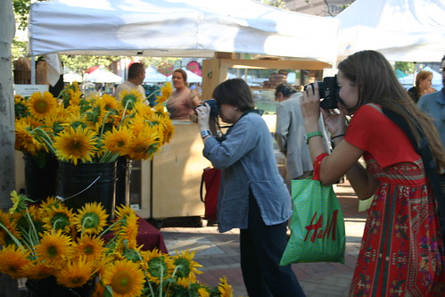 Photographing sunflowers | by sondy