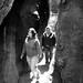 Elica & Sarah in Sequoias