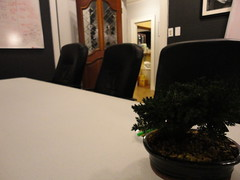 conference room bonsai tree