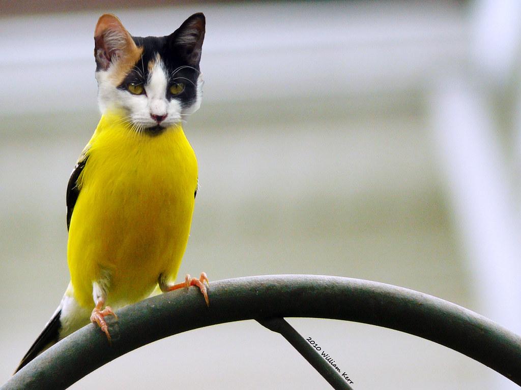 Photoshop Cat Cat Bird Photoshop Play