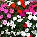 Flowers Crocker Galleria