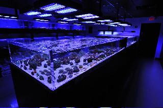 Aquarium store reef culture flickr for Fish store phoenix