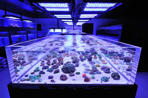 Coral frag holding tank at reef culture in phoenix az lit for Fish store phoenix
