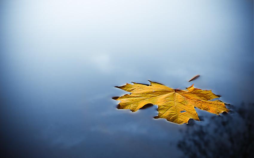 variation of leaf on water jan j237lek flickr