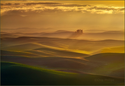 Small Forest, Palouse Hills | by Chip Phillips
