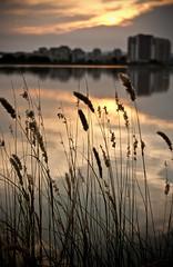Sunset by Catalin Palosanu