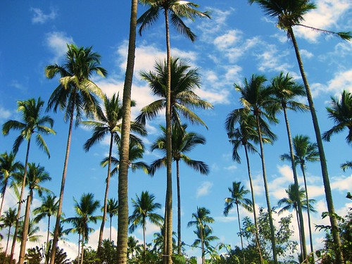 Coconut Trees | by FlipMode79
