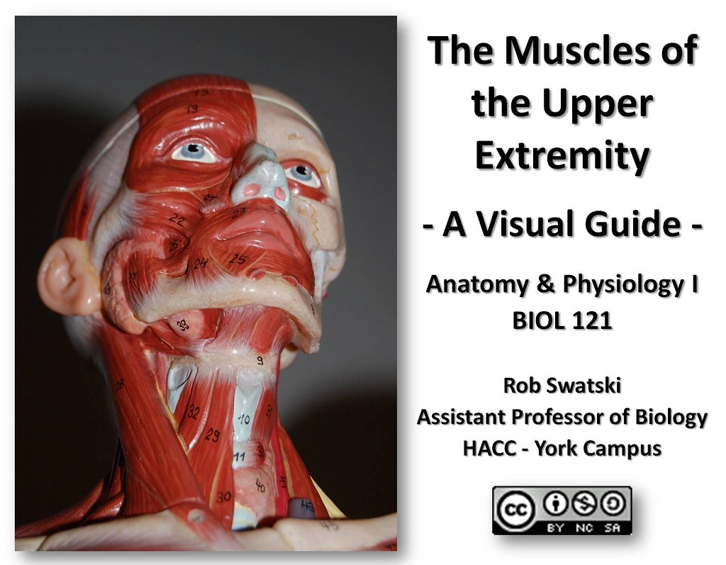 Muscles of the Upper Extremity - Anatomy Visual Guide | Flickr