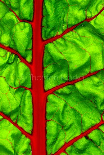 Foliar Pattern | by Thorsten (TK)