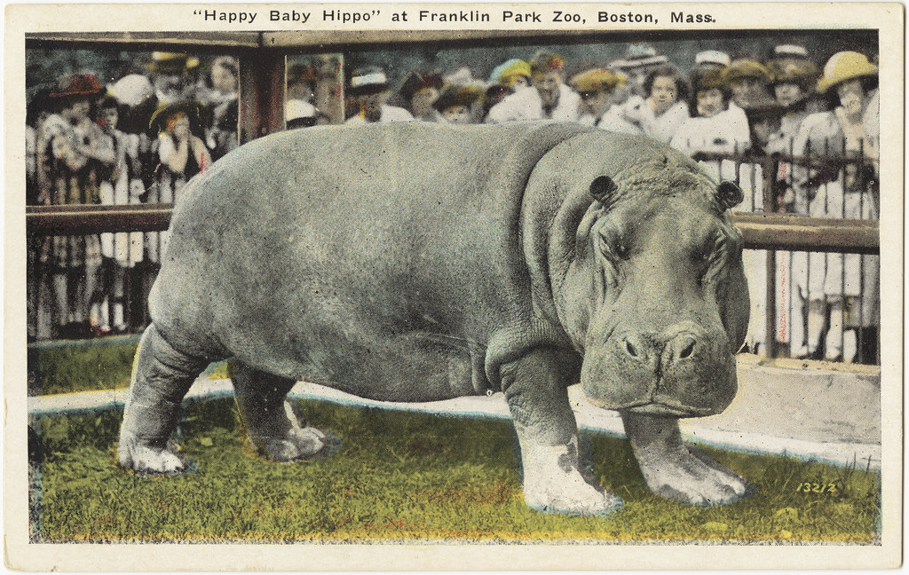 QuotHappy Baby Hippoquot At Franklin Park Zoo Boston Mass Fr