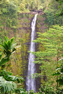 Akaka falls    Big Island  Hawaii | by marinfinito