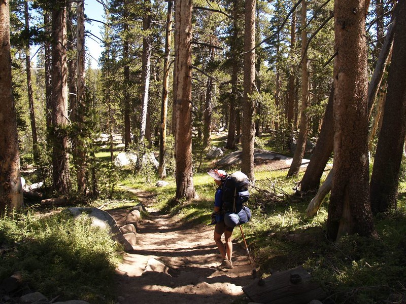 Back on the Rafferty Creek Trail, hiking downhill through the forest toward Lyell Canyon