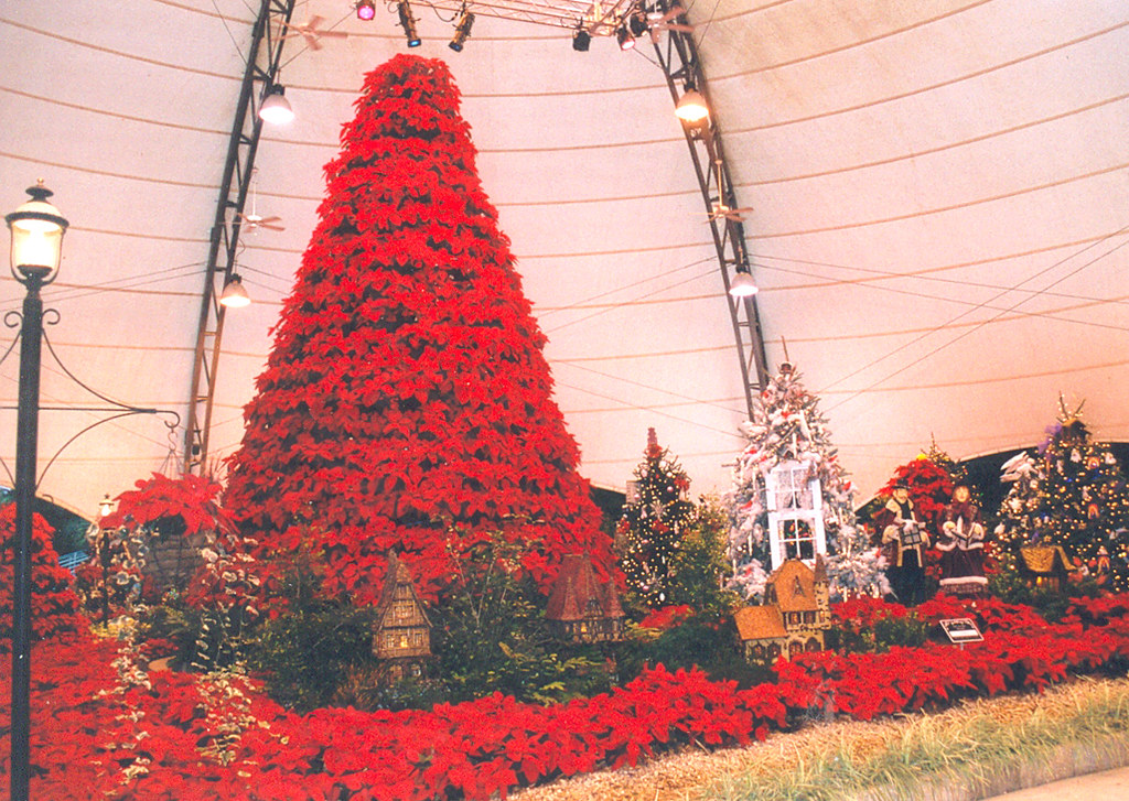 Cypress Gardens Poinsettia Quot Christmas Tree Quot This