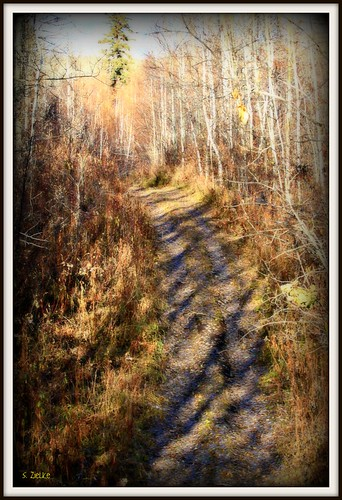 Pathway to the unknown | by Sheree (Here intermittently)