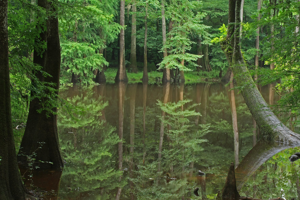 Congaree national park, cedar creek canoe trail, Columbia, SC