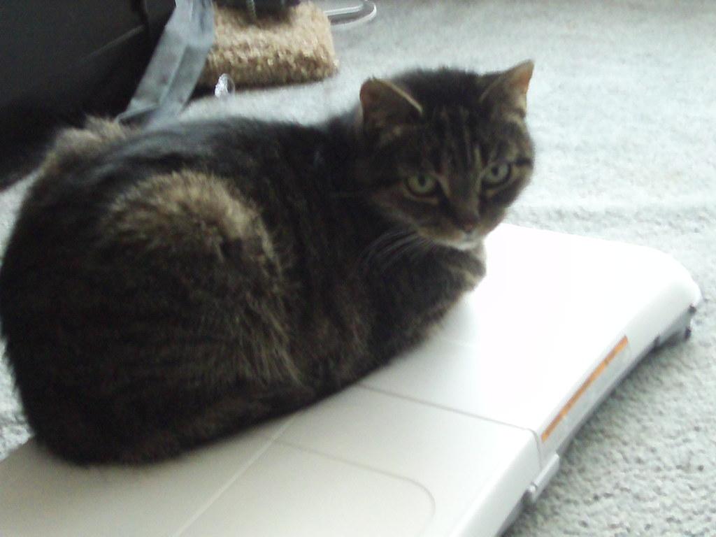 Cat Balance Off Balance Plus Eating Litter
