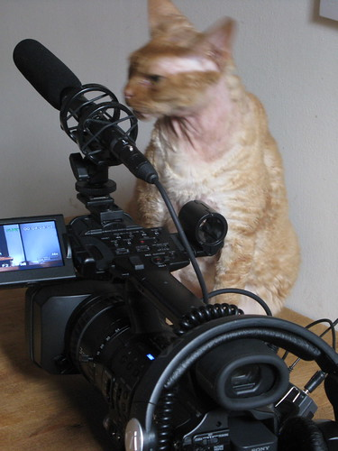 cat and camera portrait | by geekcalendar