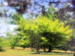 Landscape with Trees ( Please View Large) | by Universal Pops (David)