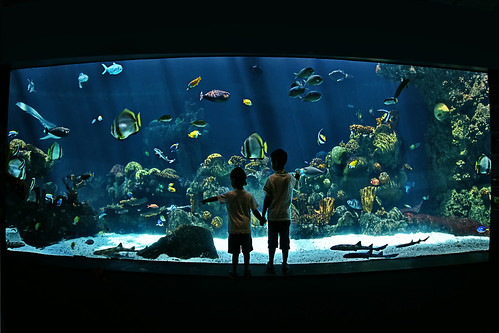 minnesota zoo aquarium underwater | by Dan Anderson.