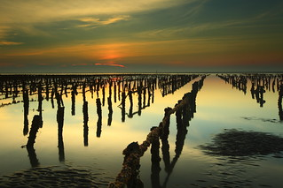 oyster field sunset 蚵田夕照 | by Thunderbolt_TW