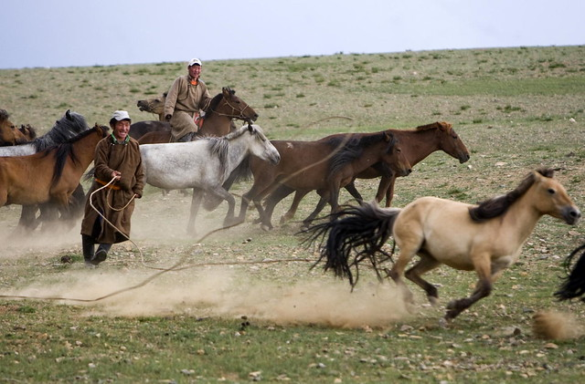 undp aids mongolian herders flickr photo sharing