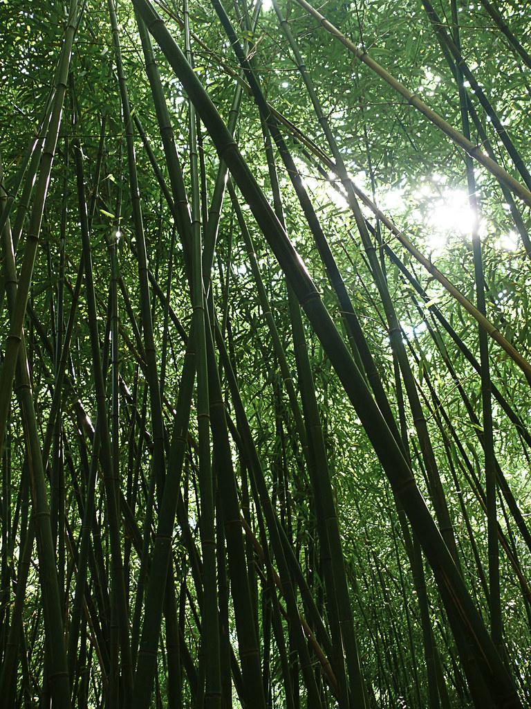 Bambuswald Beautiful Green Light Inside The Little Bamboo Flickr