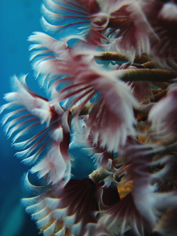 Undersea Flowers #5 | Canon D10, Underwater This little ...