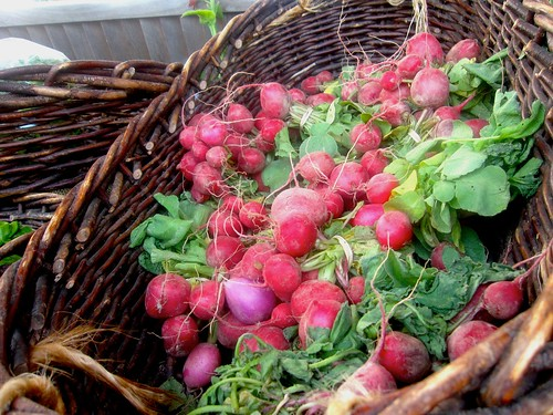 (1) bunch of Radishes - CSA Wk 1 | by NoLoveMoreSincere